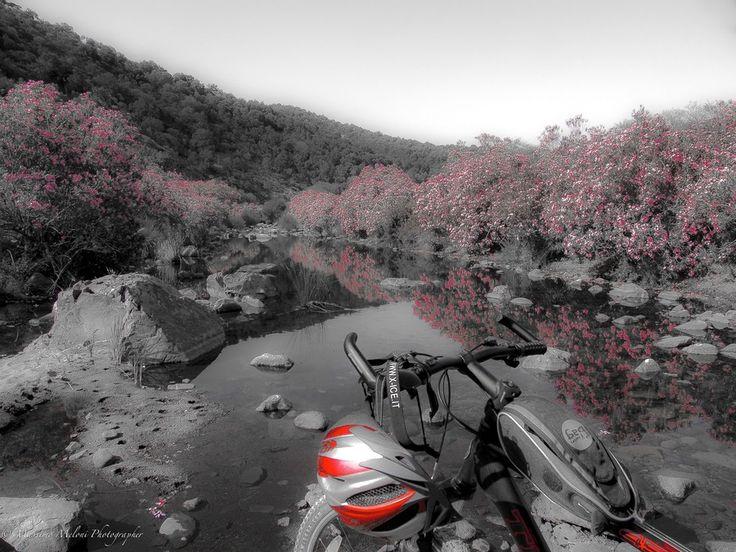 Traveling by Bike - WWF Monte Arcosu - Sardegna by massmelon  on 500px