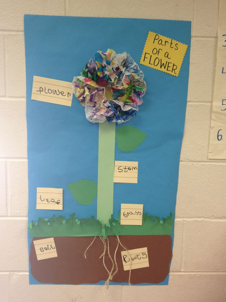 labeling the parts of a flower with pre k pre k earth day plants pinterest a flower. Black Bedroom Furniture Sets. Home Design Ideas