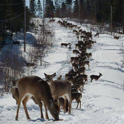Saskatchewan Winter