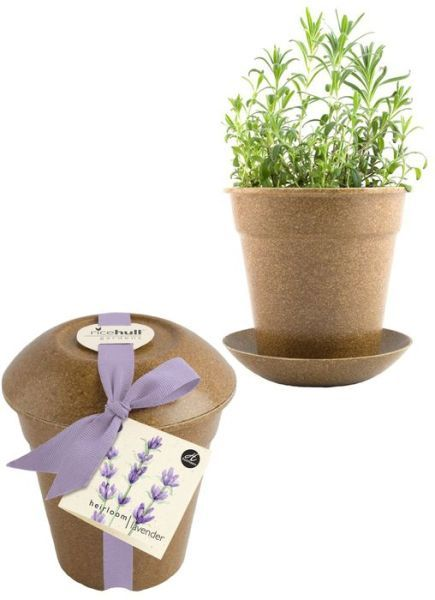 Indoor/Outdoor Lavender Rice Hull Garden | Organic