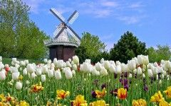 Bunga Tulip Terindah di Dunia | flo0122