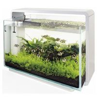 Superfish Home 80Aquarium White 80L Simulates a natural sunrise by intensifying the light level slowly to a maximum over a 30 second period. Ideal for Aquascaping http://www.MightGet.com/february-2017-2/superfish-home-80aquarium-white-80l.asp
