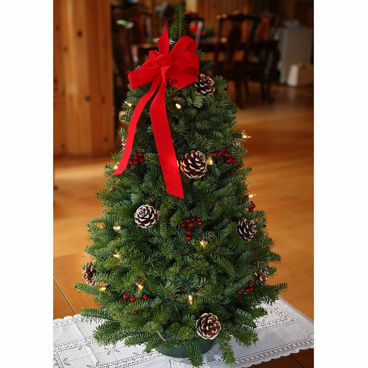 2310 Best Garden Christmas Decorations Images On Pinterest  - Christmas Tree Discounts