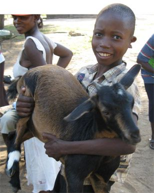 A boy with the goat his family received as part of livestock project. http://www.plan.org.au/Our-Work/Countries-we-work-in/Africa/Zimbabwe.aspx#prettyPhoto[pp_gal]/5/