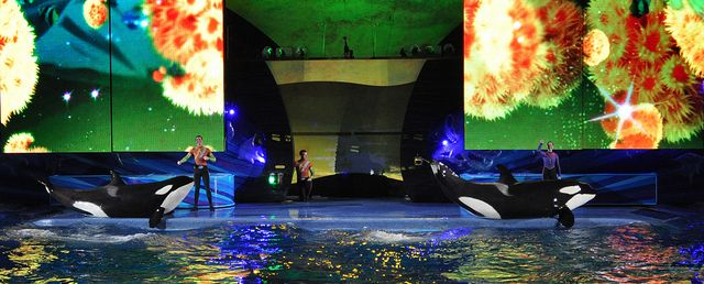 Summer Nights en SeaWorld Orlando - Conciertos de Verano en SeaWorld