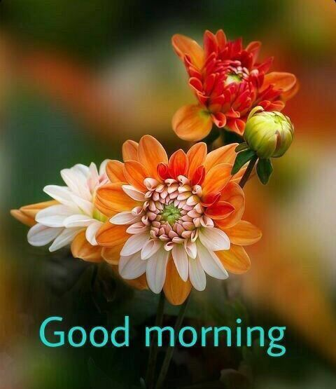 Good Morning Orange Flowers : Best images about good morning on pinterest