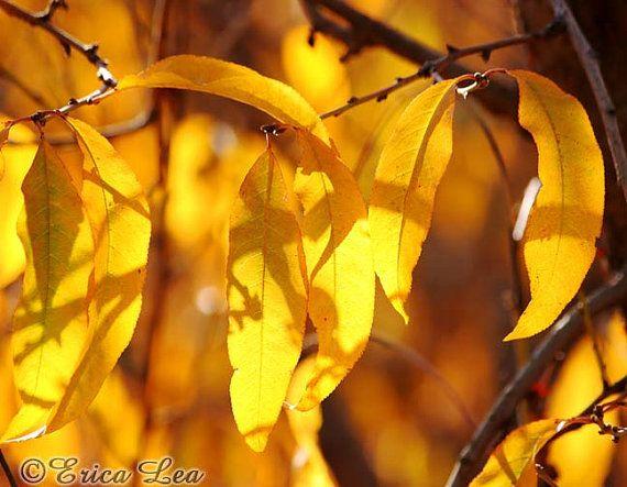 Oogst van de Gouden herfst bladeren foto val door SightToSoul