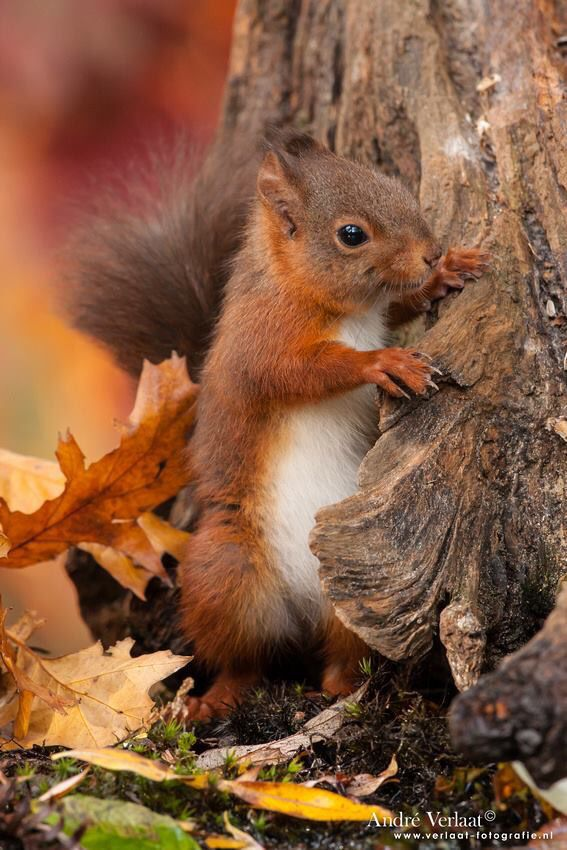 Adorable Little Baby Squirrel - Aww!                              …
