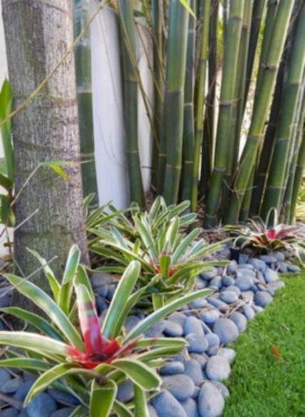 garden borders tropical landscaping