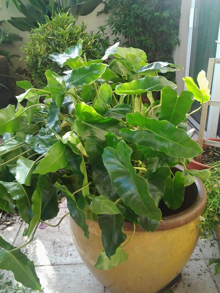 Love Large House Plants