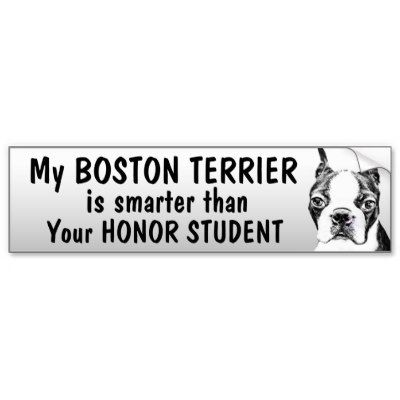 Boston terrier smarter than student funny bumper sticker