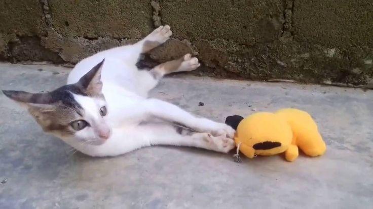 Video Kucing Lucu  -  Kucing Konyol - The Neon Vs Boneka Garfield