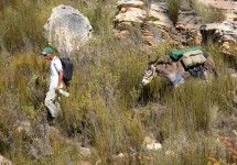The Donkey Trail - The Donkey Trail is a 30km, 3 night, two day, guided and fully catered hike into Gamkaskloof (Die Hel). The trail was started as a community development and animal rescue initiative and has become a popular hike with both local and foreign hikers.