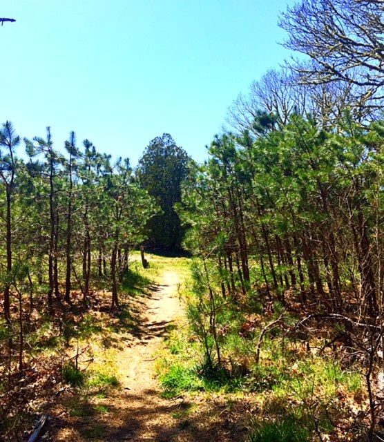 25 Best Walking/Hiking On Cape Cod Images On Pinterest