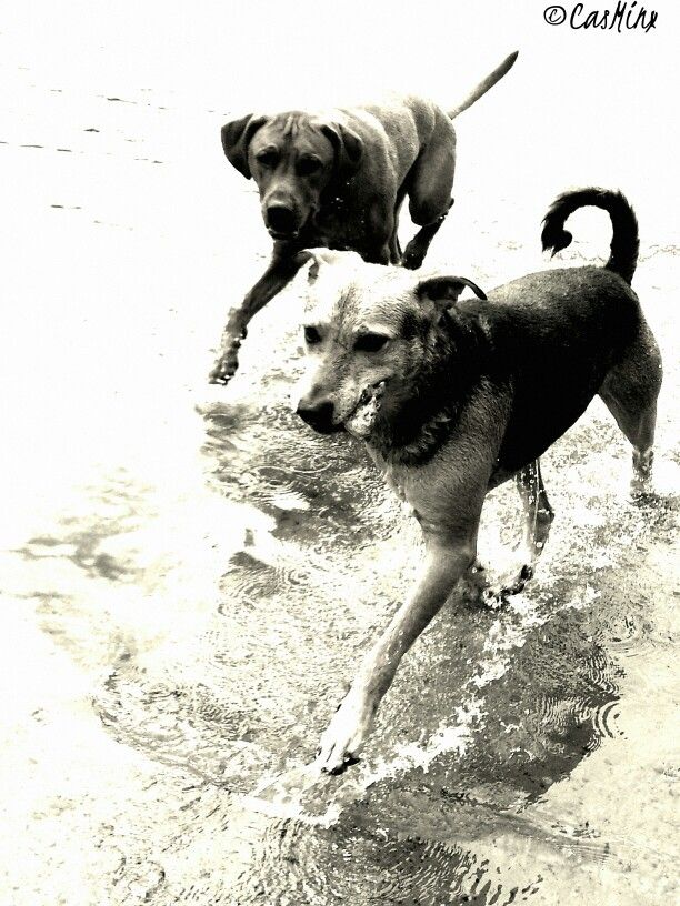 Buddy and Jacko