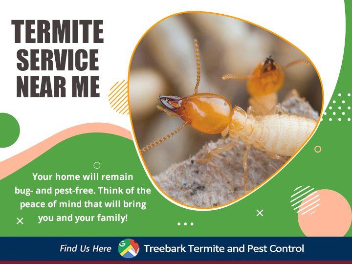 Termite Service Near Me In 2020 Termites Termite Control Expensive Houses