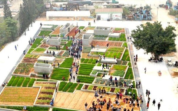 Urban Gardening: Auch Chinesen begeistern sich jetzt für den Trend