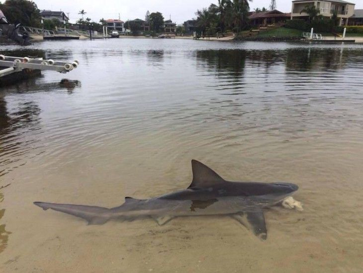 Image result for photographs of sharks near land