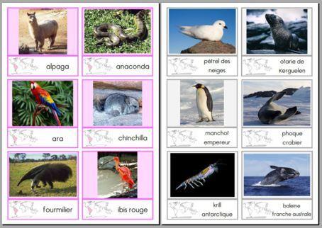 cartes : les animaux des différents continents