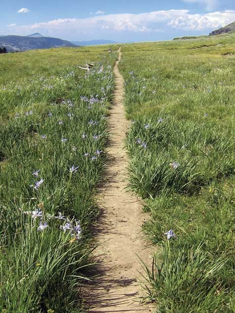 California - south of Upper Truckee River - Pacific Crest Trail Association - Photo Gallery
