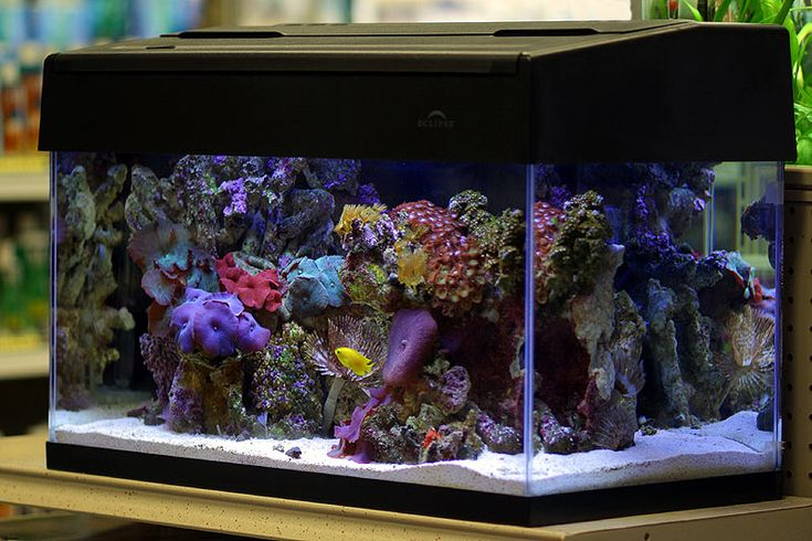 Mini reef aquarium nano home fish and tanks for Saltwater fish for small tank