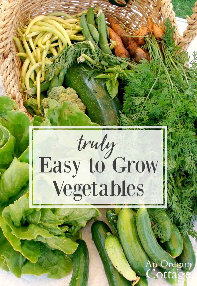 The 11 vegetables that actually are easy to grow (and the ones that take a bit more work). Perfect for beginner gardeners and stalwarts for gardeners at all stages. #vegetablegarden #vegetables #gardening #easygardening #anoregoncottage