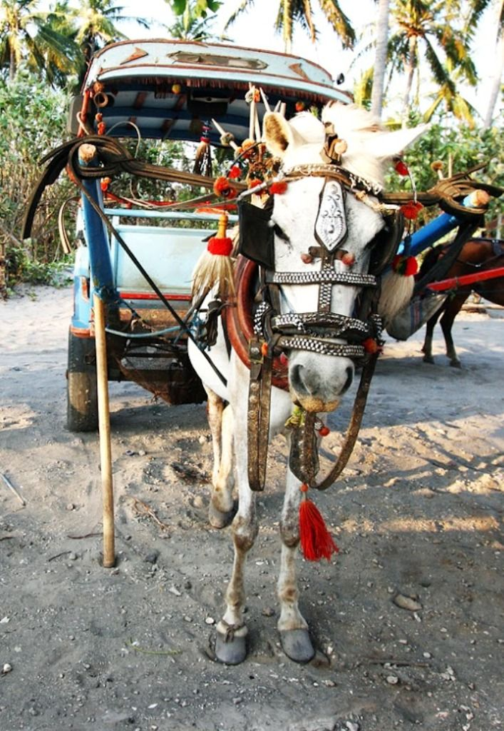 Instead of cars: adorable little ponies! Gili Islands