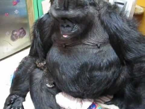 Ape language in Dawn of the Planet of the Apes doesn't ...