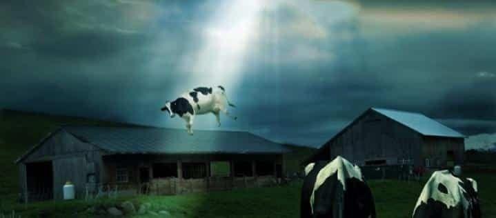 Ufo e #Alieni: ritornano i casi di #mutilazione del bestiame: ecco il video