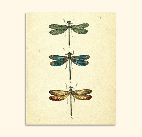 Vintage dragonfly art print digital graphics animal for Dragonfly wall art