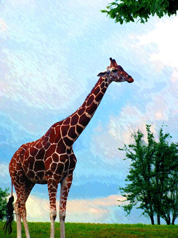 A towering and chatty Giraffe