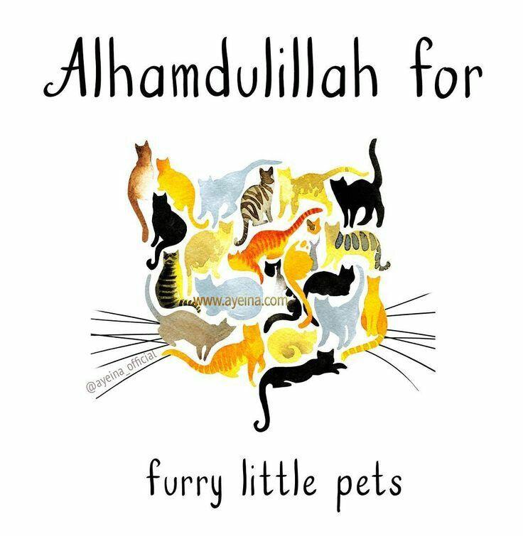 Alhamdulillah for ...