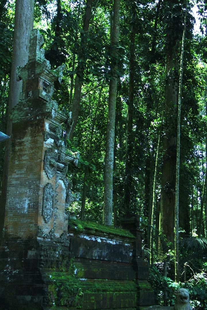 Sangeh monkey Temple