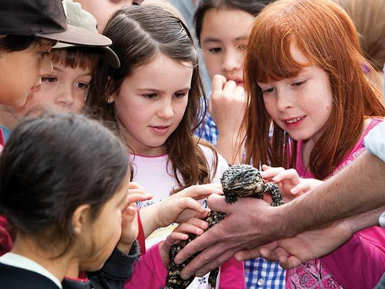 Visit Blackbutt Reserve for entertaining reptile shows on the weekends.