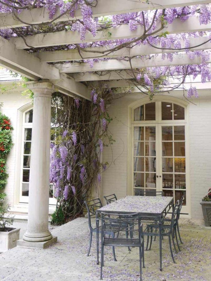 Pergola mit Blauregen vor dem Hauseingang