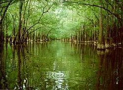 Cedar Creek in Congaree National Park, NC. This park has the largest portion of old-growth floodplain forest left in North America. Some of the trees are the tallest in the Eastern USa