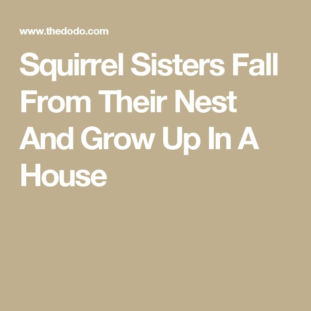 Squirrel Sisters Fall From Their Nest And Grow Up In A House