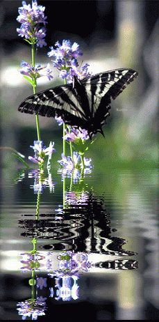 Animated Graphics Animated Flowers Beautiful Flowers Insects Keefers image by Keefers_ - Photobucket