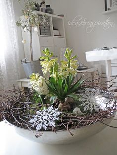 Nur wenige Zutaten habe ich zusammen getragen um eine neue Blumendekoration zu machen. Eine große Silberschale, ein Hyazinthe...