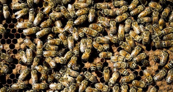 Bee swarms: What you need to know to stay safe  Many Arizonans know the sound well: A loud buzzing from above means a bee swarm is near, and it is on the move.