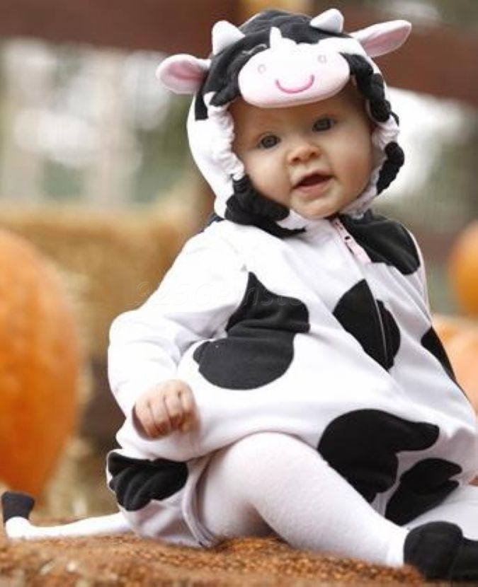 141 Best Cow Appreciation For Me The Babies Matthew Hammitt And His