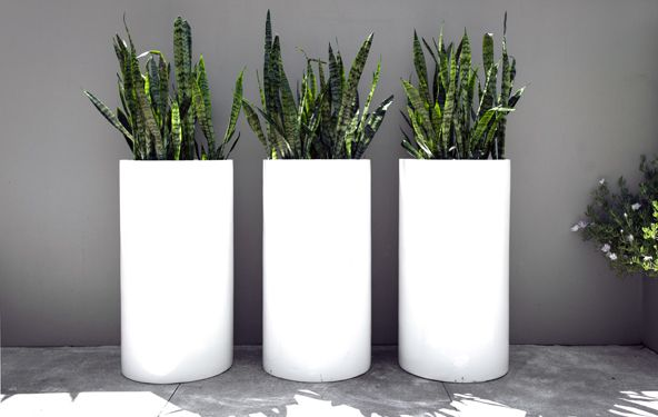 Contemporary Lightweight Tall Cylinder The Contemporary Range, made from a mixture of glass fibre and clay, makes for a strong yet lightweight planter. The modern material is complimented by the slick finish and ultra modern shapes that the range comes in.