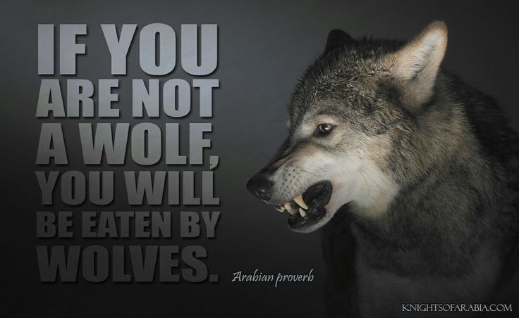 """""""If You Are Not A Wolf, You Will Be Eaten By Wolves"""