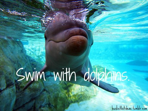 Bucket List Ideas- swim with dolphins again..I was lucky enough to do it once and it was amazing!
