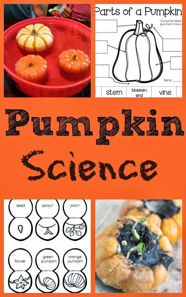 17 Best Images About Pre K Pumpkin Ideas On Pinterest