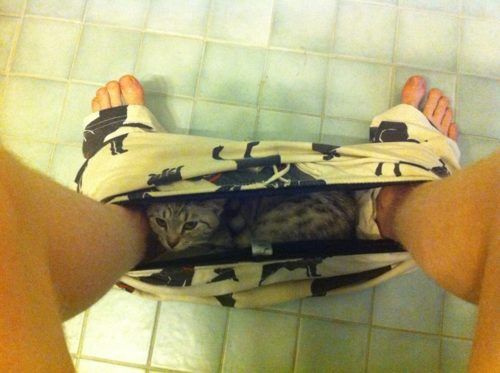 Surprise!: Animal Lovers, 30 Photo, Animal Pictures, Funny Pictures, Catsal Kind, Funny Stuff, Cat Photo, Funny Animal, Humor Things