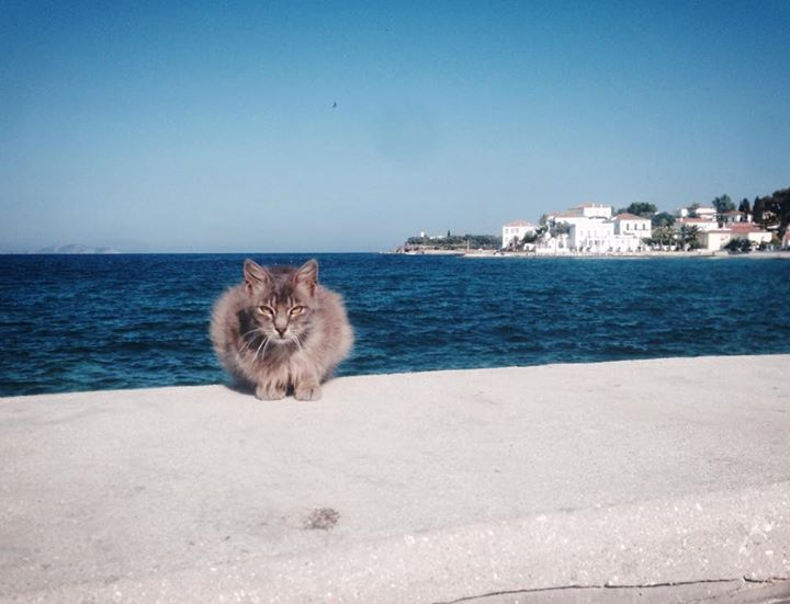 Cats of Spetses - photo by A. Charitatou