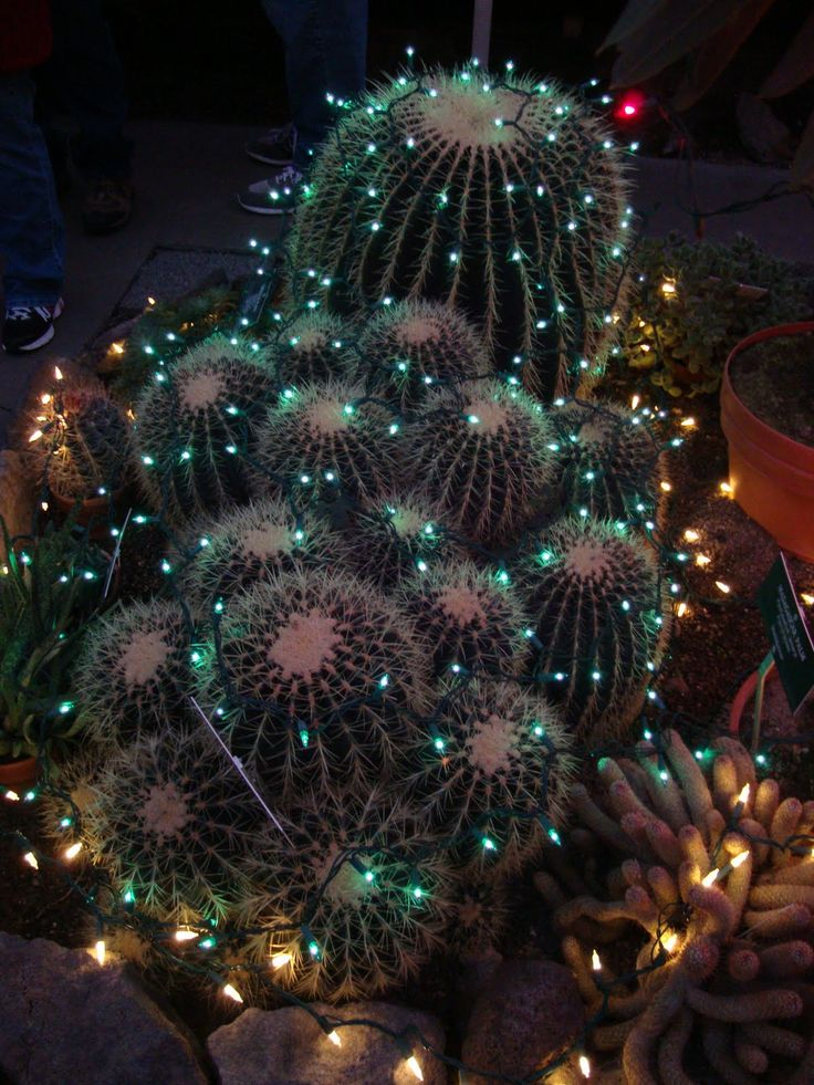 christmas tree cactus garden - photo #29
