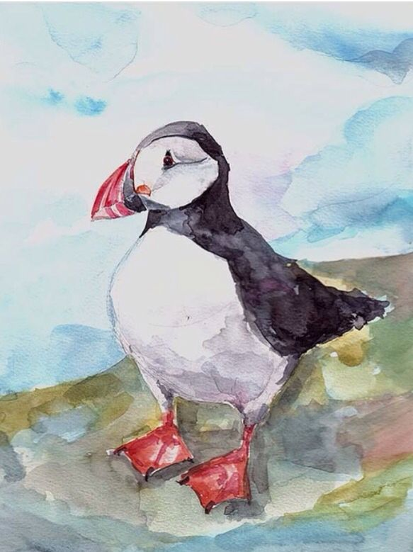 puffin. Watercolor. Beautiful bird. Iceland.