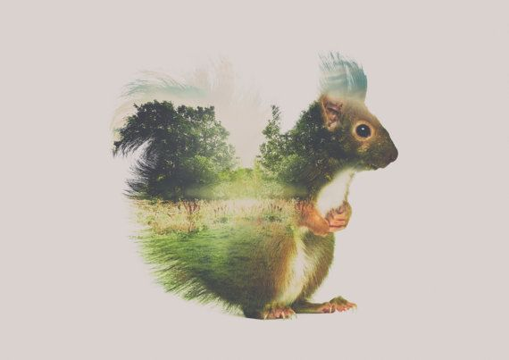 Print 120 : Squirall wall art, Double exposure art print of a squirrel in a meadow, digital art print, direct download, modern print, animal print  Type: Digital art print. This is a digital product with instant download.  Orientation: Horizontal  Print sizes: 1. 4:5 ratio for printing 5x4inc / 10x8inc / 20x16inc / 50x40cm  2. International A4 ratio for printing   ABOUT YOUR PURCHASE:  - This is a digital download, therefore, no physical item will be shipped.  - This image can be resized by…
